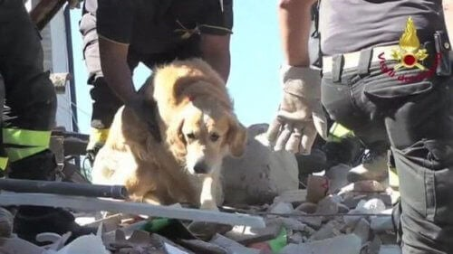 Hund räddad nio dagar efter jordbävning