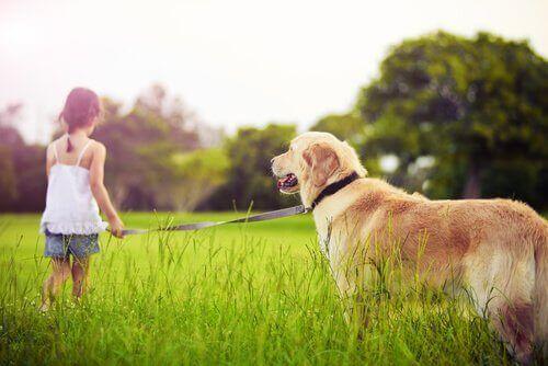 Vad man gör då ett barn ber om ett husdjur
