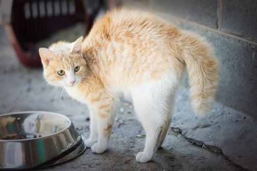 Fem vanliga orsaker till fobier hos katter
