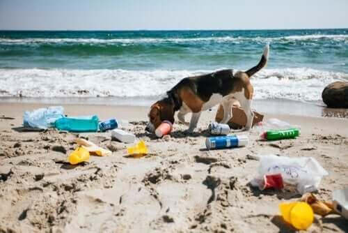 Hund letar skräp på en strand.