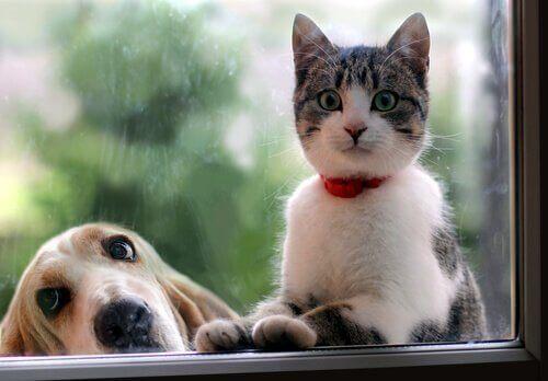 En katt och en hund sitter bredvid varandra och tittar ut genom fönstret.
