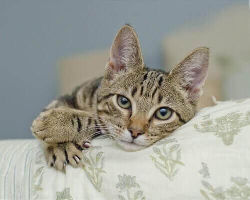 Katt som ligger på soffan.