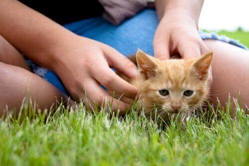En kattunge gosar med sin ägare på gräsmattan.