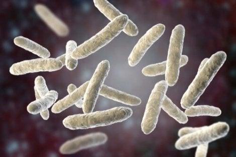 Bakterier i tarmarna