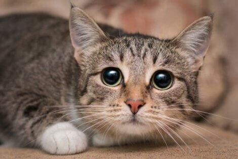 En rädd katt