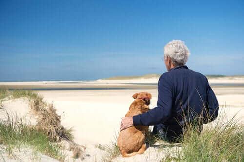 Tre vanliga hälsoproblem hos äldre hundar