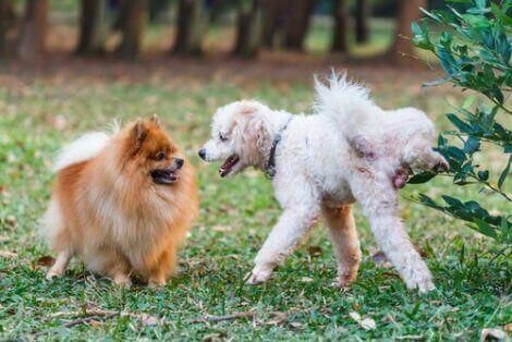 Hund kissar på buske