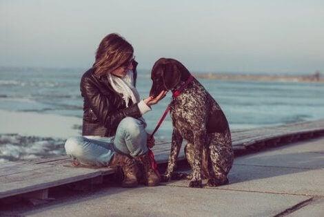 Pointers är några av de mest sociala hundraserna