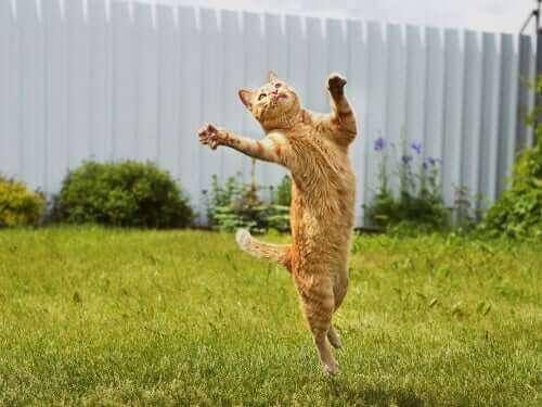Smidig katt hoppar efter något som flyger.