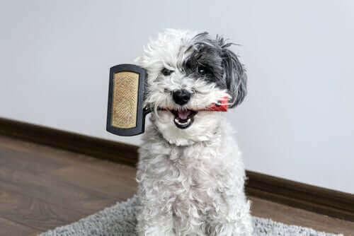 Lurvig hund med hundborste i mun.