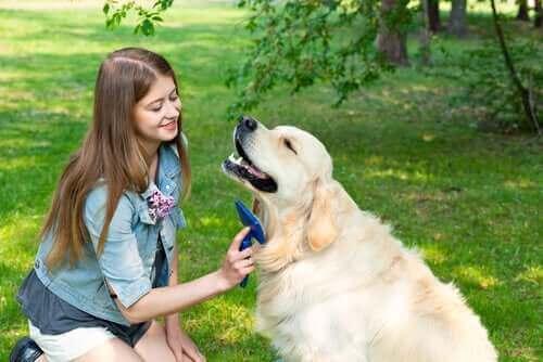 Kvinna borstar sin hunds päls.