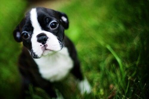 Hur man kan lära hunden självkontroll