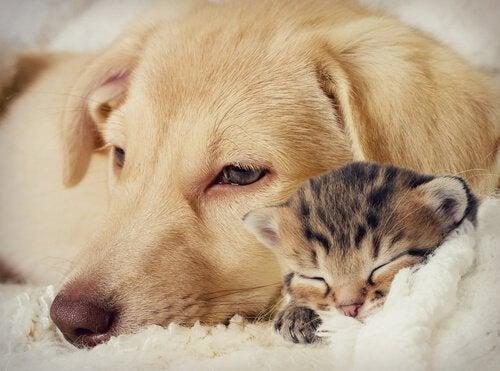 Musik tillägnad husdjur: Bob Dylan skrev för sina djur