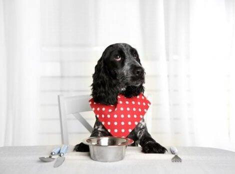 Hund väntar på mat