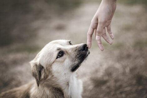 Hundar har fantastiskt luktsinne