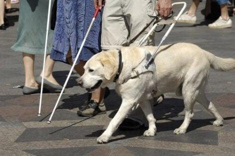 Ledarhund med sin ägare