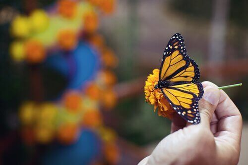 Monarkfjäril äter nektar från en blomma.