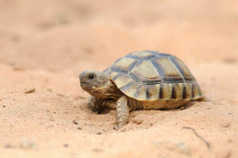 Sköldpaddor i Spanien: en fascinerande värld