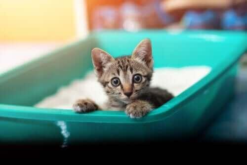 Orsaker och symtom på dysenteri hos katter