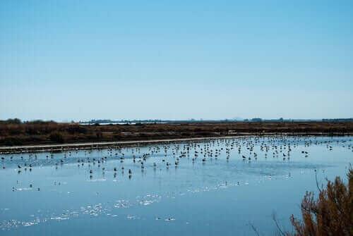 En flock fåglar vid en stor sjö.