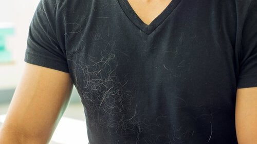 Tips för att få ett hårfritt hem även om du har hund