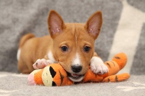 Den stora debatten: Om hundar behöver prozac