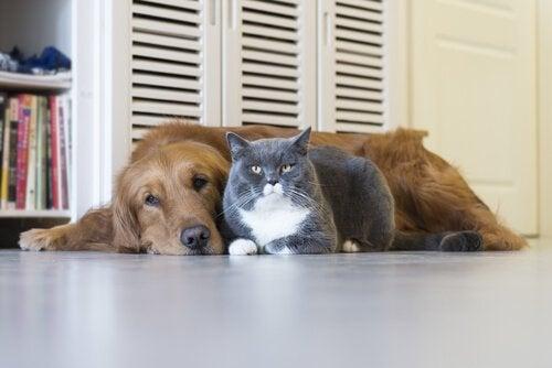 Hund och katt kompis sitter bredvid varandra.