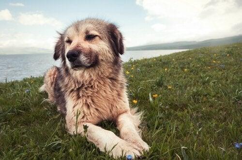 7 typer av beteendeproblem hos våra hundar