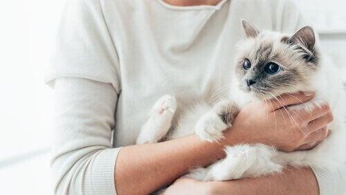 Katt i sin ägares famn.