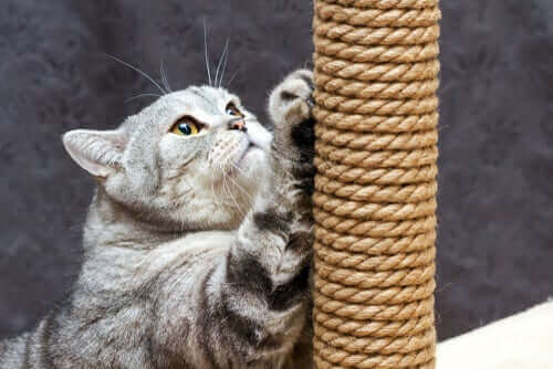 Katt med klösträd.