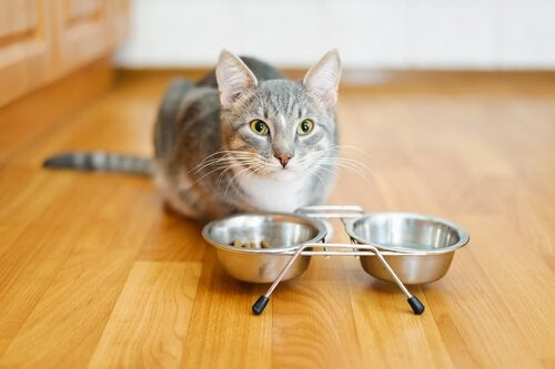 Katt sitter vid sin matskål.
