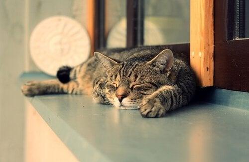 7 skäl till att katter sover mer under dagen än på natten