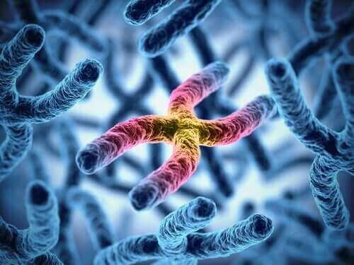 Flytande X kromosomer