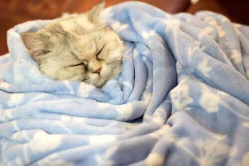 Upptäck sanningen: Går katter i dvala på vintern?