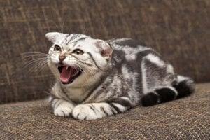 övervinna sin rädsla: katt ser rädd ut