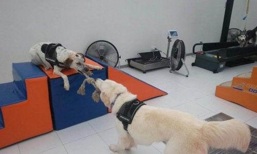 Body Dog: Ta en titt på det första gymmet för hundar