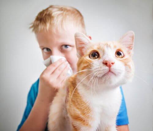 Allergisk mot kattpäls: Varför påverkas så många människor?