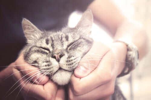 Katt som gosar med en människa.