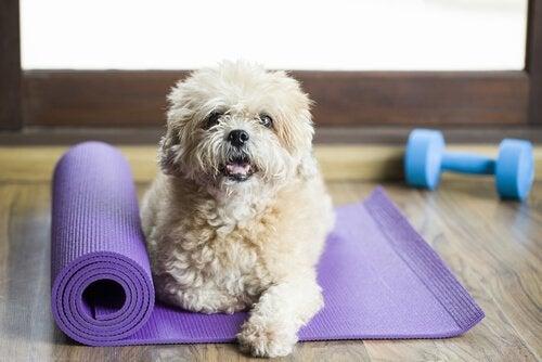 Har du hört talas om gym för hundar?