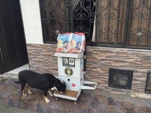 Hund äter från en dispenser.