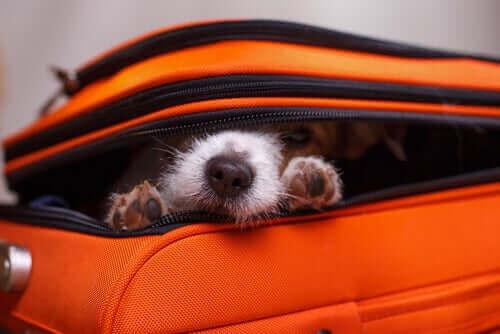 Hundens beteende: Varför gömmer sig hundar?