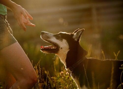 Hund tittar på sin ägare.