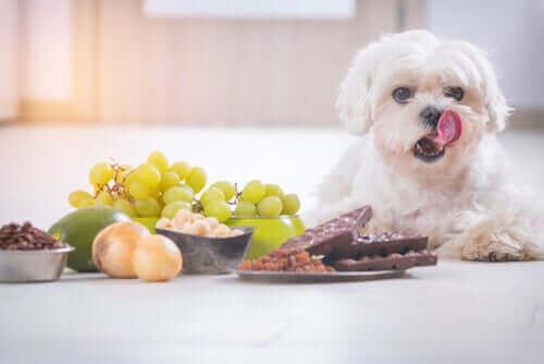 Hund med en hög med oätlig mat framför sig.