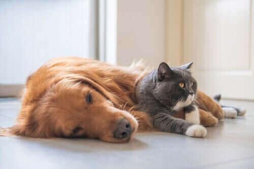 Hund och katt ligger bredvid varandra.