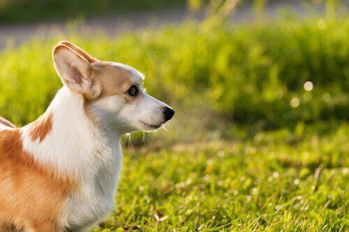 Kan husdjur bränna sig i solen?