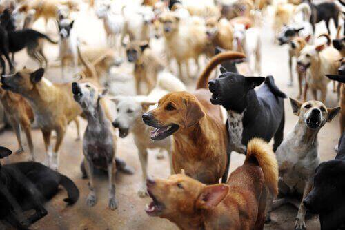 En stor samling av hundar.