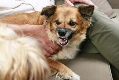 Hundar som morrar - Vad handlar beteendet om?