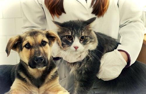En katt och en hund hos veterinären.