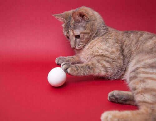Katt leker med äggformad boll.