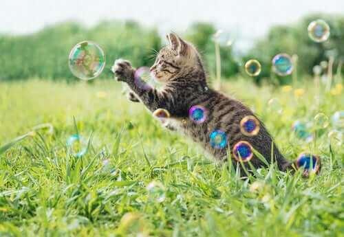 En kattunge som leker med såpbubblor.